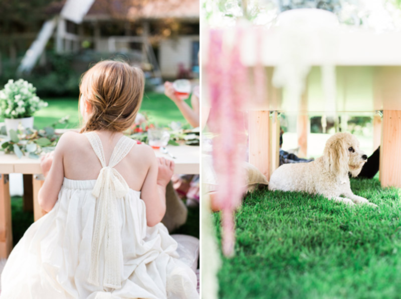 tea-party-dress-puppy